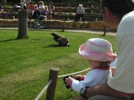 Neunkircher Zoologischer Garten in Neunkirchen • HolidayCheck