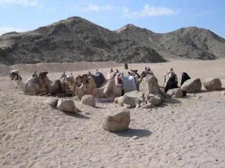 Kamele im Beduinendorf während der Quad-Tour - Quad Tour Hurghada