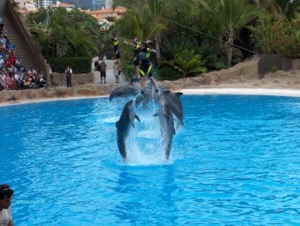 Delfin-Show - Loro Parque