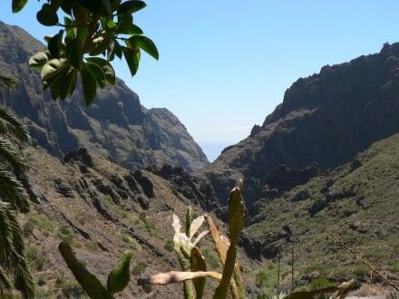 """Blick von der Terrasse des """"El Guancha"""" - El Guancha"""