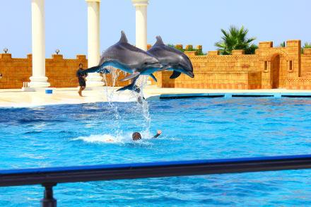 Freizeitpark - Sealanya Delfinpark