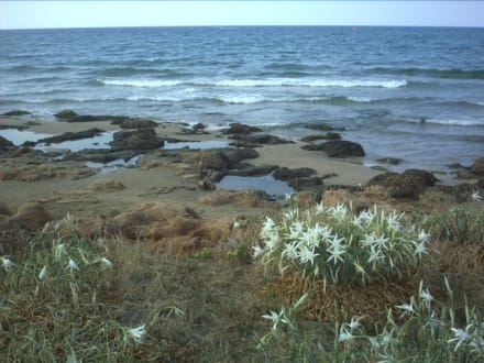 Griechenland - Kreta - Malia - Strand - Strand Malia