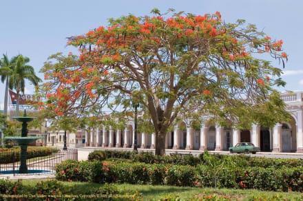 Parque José Martí (ehem. Plaza de Armas) - Parque Marti