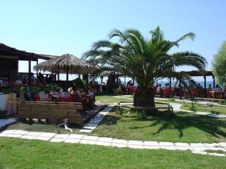TamTam Beach - Tam Tam Beach Bar