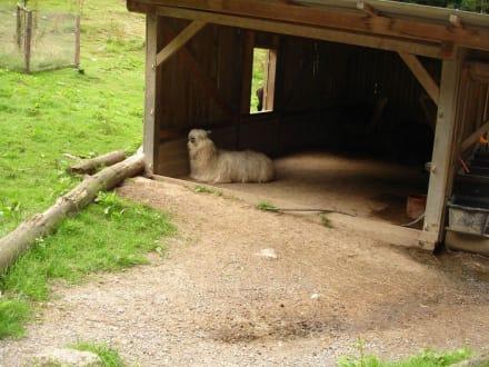 Tierpark Bretten - Tierpark Bretten