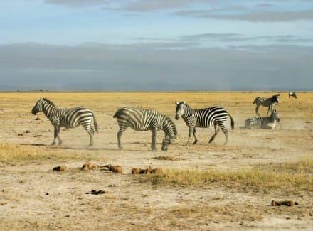Auf Safari - Amboseli Nationalpark