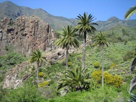 Landschaft am Wegesrand - Tal von Benchijigua