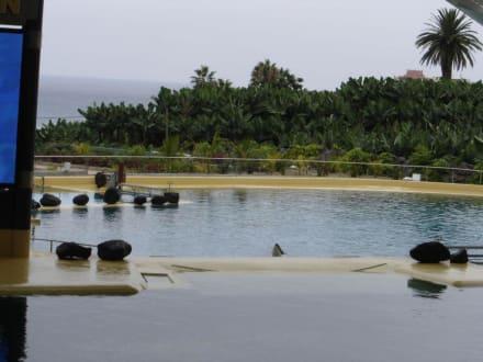 Orca Becken - Loro Parque