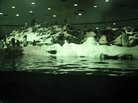 Loro Park - Pinguine - Loro Parque