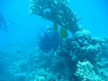 Unterwasser - Tauchen Hurghada