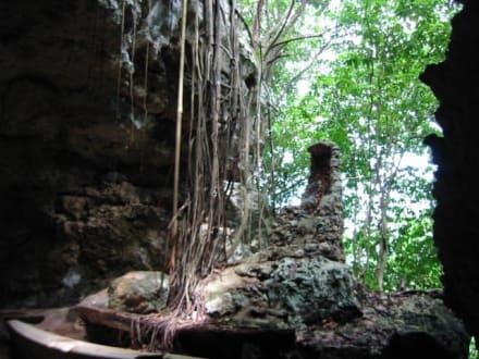 Thron des Wodu Königs - Nationalpark El Choco