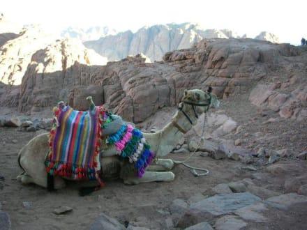 Sonnenaufgang auf Mosesberg - Mosesberg (Gebel Musa) / Berg Sinai