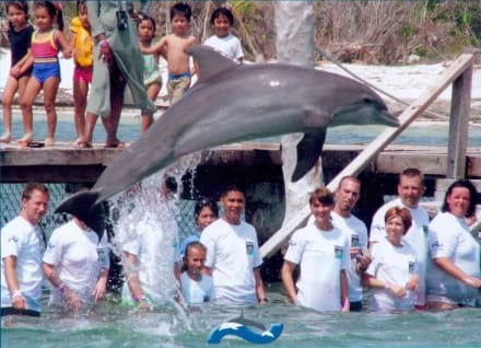 Trainer for a Day - Delfinschwimmen Cancun