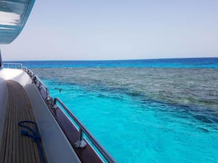 Klares Wasser und Riffe  - Delfinschwimmen Delfine & Meer