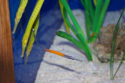 Underwater World - Underwater World
