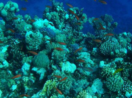 Unterwasserwelt 1 - Tauchen Marsa Alam