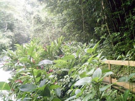 Tropische Landschaft an den Y.S. Falls - YS Falls / Y.S. Wasserfälle