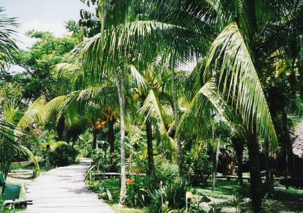 der Weg zu den einzel stehenden Häusern - Orinoco Delta