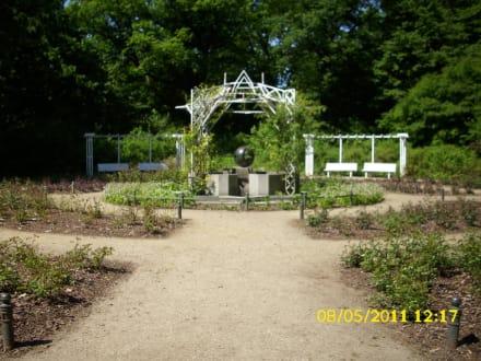 Rosengarten - Volkspark Hasenheide