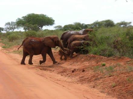 Berghoch müssen wir noch üben - Tsavo Ost Nationalpark