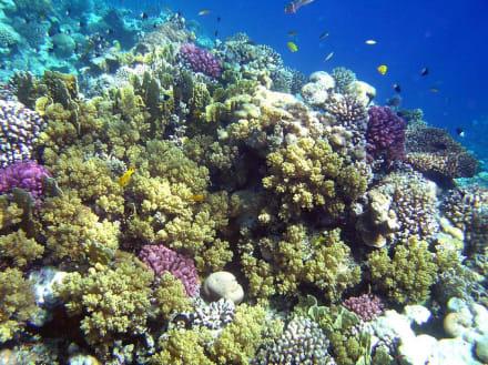 Korallenriff - Schnorcheln Makadi Bay