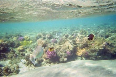 Wunderschöne Unterwasserwelt - Hausriff Hotel Lahami Bay Berenice