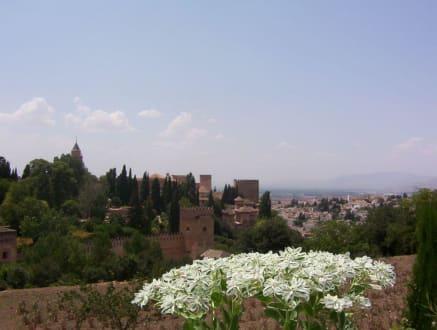Blick zu Alhambra - Alhambra