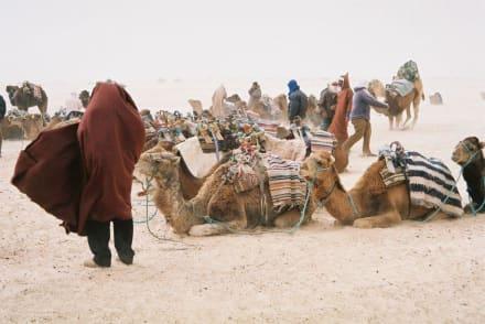 Etwas windig! - dune-desert-discover