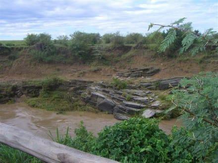 am Talek River - Masai Mara Safari