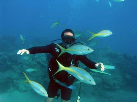 Tauchen am Riff - Tauchen Sosua