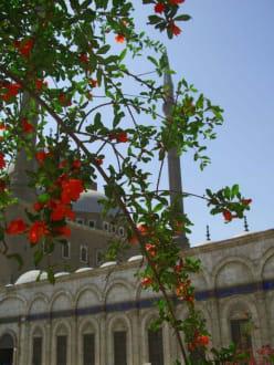 Muhamed-Ali Moschee - Zitadelle