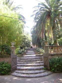Garten vom Alfabia - Gärten von Alfabia