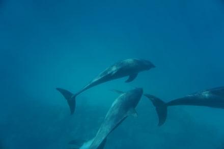 Die Delfine - Delfinschwimmen Delfine & Meer