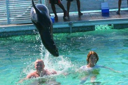 Freizeitpark - Delfinschwimmen Dolphin Island Bavaro
