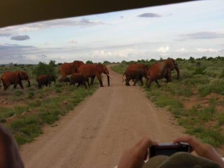 Großfamilie auf Wanderschaft direkt an uns vorbei - Tsavo Ost Nationalpark