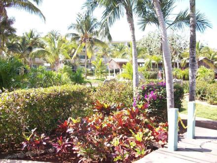 Jardin et balcons - Hotel Sol Cayo Coco