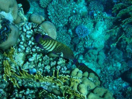 Unterwasserwelt 5 - Tauchen Marsa Alam