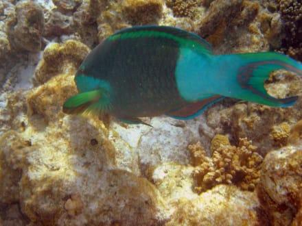 Wunderbare Unterwasserwelt - Manta Point Süd-Malé-Atoll