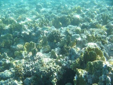 Unterwasser - Schnorcheln Makadi Bay