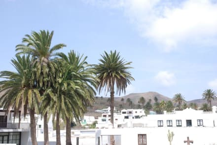 Blick auf die Palmenoase - Tal der tausend Palmen