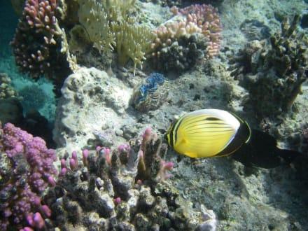 Unterwasserfoto - Tauchen El Quseir