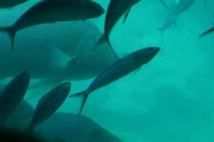 Hier ist noch Leben im Meer - Tauchen Hurghada