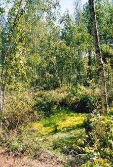 Biebrzanski Park - Biebrzański Park Narodowy
