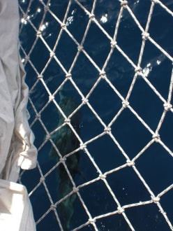 Delfin schwamm mit uns - Bootstour Calypso Colakli