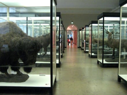Senckenberg - Naturkundemuseum Senckenberg