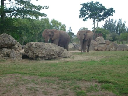 Elefanten - Zoo Miami