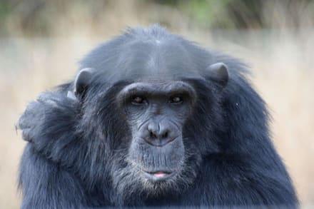 Boko - Safari