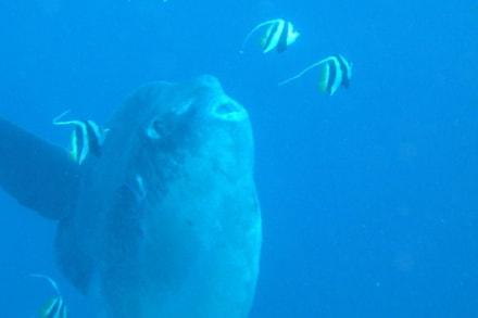 Mola Mola - Tour & Ausflug