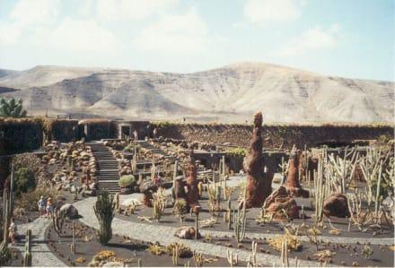 Lanzarote - Jardin de Cactus - Jardin de Cactus / Kaktusgarten Guatiza