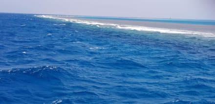 Was für ein Ausblick - Delfinausflug mit Mo